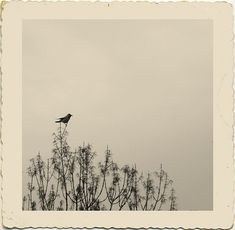 fine-things:    Bird in a tree.