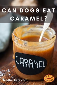 No, your dog should not eat caramel. While caramel is not toxic for your dog, it contains raw sugar, which you should never give to your dog. Sugar can cause cavities, obesity, and diabetes, and it can also affect your dog's mood. What should I do if my dog eats caramel? 1. If your dog eats caramel, keep an eye on them. Your dog may show changes in their behavior. These can include hyperactivity, difficulty concentrating, lethargy, or irritability. If you are feeling concerned, contact your… Can Dogs Eat, Dog Eating, Cavities, Diabetes, Behavior, Your Dog, Caramel, Sugar, Mood