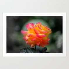 Rose 2138 Art Print by metamorphosa - $22.88