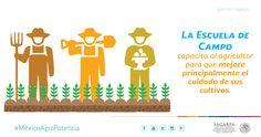 La Escuela de Campo capacita al agricultor para que mejore principalmente el cuidado de sus cultivos. SAGARPA SAGARPAMX #MéxicoAgroPotencia