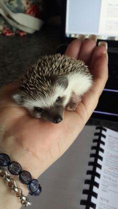 My little Krimpnis!
