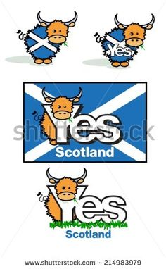 Highland cow cartoon for Scottish referendum yes campaign, with saltire flag. - stock vector