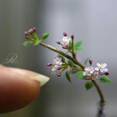 Yukari Miyazaki Miniature Plants, Miniature Gardens, Biscuit, Fairy Garden Plants, Mini Plants, Polymer Clay Flowers, Polymer Clay Miniatures, Flower Pictures, Miniture Things