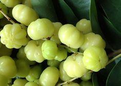 La surelle, fruit d'un arbuste ornemental