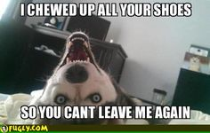I Have A Dog Like This
