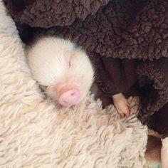 #piggy #cute