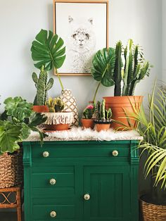 Instagram: @spencer.monk // #homedecor #boho #bohemian #camel #monstera #cactus #skull #jungalow #eclectic #styling #interior #southwest #hgtv #worldmarket #alpaca #green #plants #houseplants