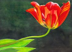 Red Tulip Painting by Catherine G McElroy - Red Tulip Fine Art Prints and Posters for Sale