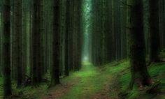 9 nejkrásnějších lesů na světě | g.cz