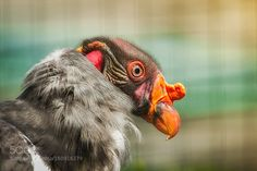 colors by knipser62 #animals #animal #pet #pets #animales #animallovers #photooftheday #amazing #picoftheday