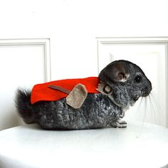 Eight Adorable Superhero Costumes For Your Small, Comic Book Loving Pet   Quirk Books : Publishers & Seekers of All Things Awesome