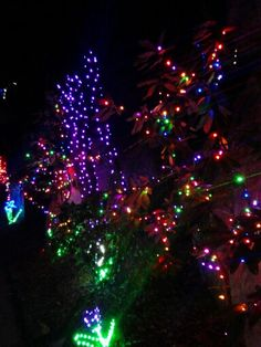 Enchanted Garden of Lights at Rock City in Lookout Mountain ...