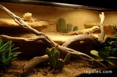 desert vivariums | Thread: Tropical & Desert Living Vivariums