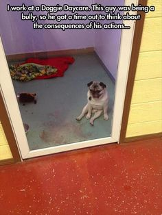 dog is in timeout