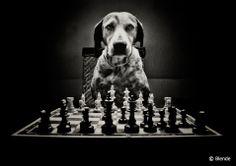 © Blende, Dietmar Pohlmann, ...der will nur spielen | Ein harter Gegner.