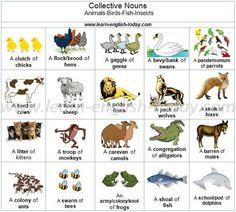 Collective Nouns in English Noun Chart, Grammar Chart, Grammar And Vocabulary, English Vocabulary, English Grammar, English Language, Second Language, Animal Collective, Collective Nouns