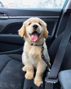 """√ 7 Cutest Dog Breeds in the World Dogs are the most favorite pets in the world. There are so many people are asume that dogs are part of their family. Here are Cutest Dog Breeds in the World.""""},""""attribution"""":null,""""debug_info_html"""":null,""""description"""":"""" Cute Dogs Breeds, Best Dog Breeds, Cute Dogs And Puppies, Best Dogs, Bird Breeds, Doggies, Puppies Tips, Small Puppies, Small Dogs"""