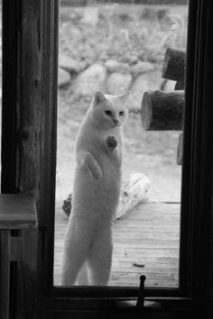 kitty at the door...