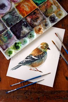 Goldfinch Painting - Original Watercolor Painting