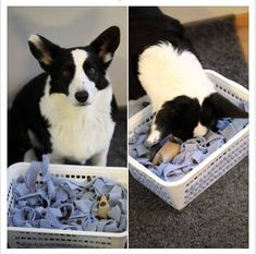 Foraging enrichment: Snuffle basket. Photo: Pia Ja Silas / FB Toy Puppies, Dogs And Puppies, Dog Boredom, Dog Enrichment, Dog Games, Dog Activities, Dog Runs, Animal Projects, Dog Agility