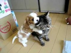 puppy hugging a kitty