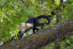 Costa Rican Wildlife in Palo Verde National Park, Guanacaste and Northwest, Day Trips The Horse Whisperer, Pacaya, Dr Dolittle, Monkey Forest, Spa Breaks, People Of Interest, Lake District, Day Trips, North West
