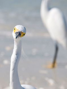 hello egret photograph: well, hello there.