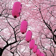 "Hanami (花見) literally means ""flower viewing"" and usually refers to cherry blossom (sakura, 桜) viewing."