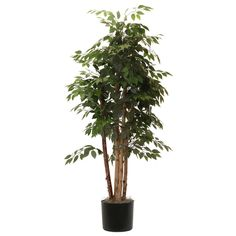 Vickerman 6 ft. Paper Birch Executive Silk Tree - TEX3460-07