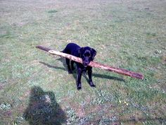 'Pets outdoors...Max and one of his sticks' - Jo Zaffeen List