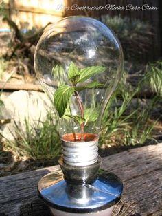 Decoração viva com mini jardins!     Os terrários são mini-jardins montados dentro de vidros de todos os tamanhos ao invés de em vasos co...