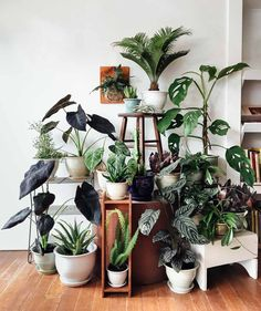 My dream is to fill a house with plants. 300 Square Feet of planted goodness nestled inside Maven Collective vintage in SE Portland - the Pistils Nursery Pop-up Plant Shop!