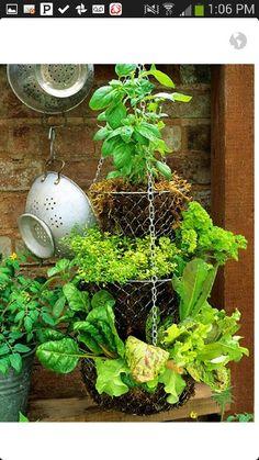 Old fruit basket = new herb garden!