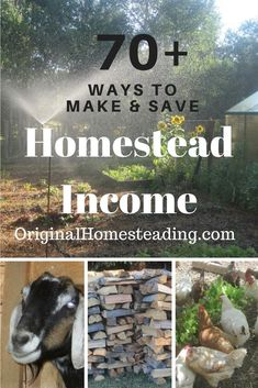 Creative and Innovation......learn to think outside the box on Making and Saving Homestead Income!!! Here are more than 70+ ideas to get you started on your way to earning money with your land and your Homestead!!!