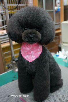 Weini Pet Salon <3