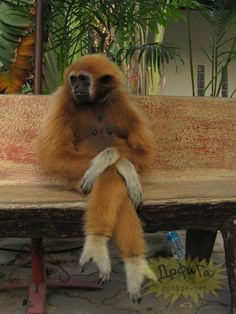 I'm oddly relieved this monkey is crossing it's legs.