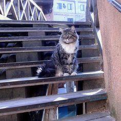 chat de l'ex-squero dei Muti Venise