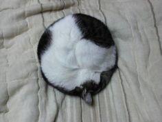 purrfect circle