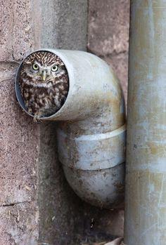 An Owlet. ❤️