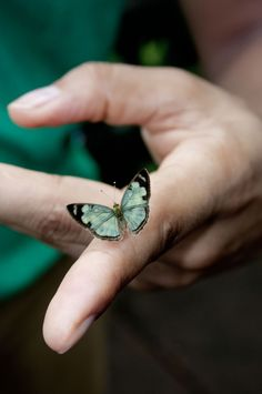 butterfly-finger ---be very still, lest movement cause this blessed moment to end prematurely... remember this moment that you were given, always... with joy...special