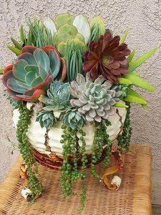 Awesome 50+ Beautiful Succulents Plants Indoor https://homegardenr.com/beautiful-succulents-plants-indoor/