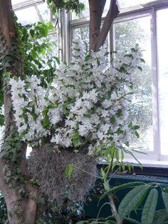 New York Botanical Garden Orchid show.