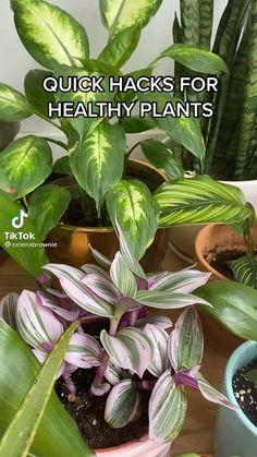 Best Indoor Plants, Indoor Garden, Garden Plants, House Plants Decor, Plant Decor, Household Plants, Inside Plants, House Plant Care, Garden Care