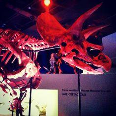 Instagram / rebeccahadley: Triceratops!!!! #HMNS