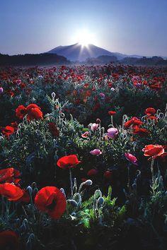"lmmortalgod: ""Flower garden by Etsuro Takihara """