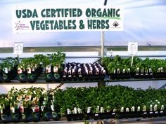 LOVE_Organics Organic Vegetables, Organic Recipes, Organic Gardening, Garden Landscaping, Helpful Hints, Nursery, Herbs, Foods, Beekeeping