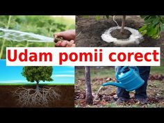 Invatam sa udam pomii corect !!! - YouTube Garden Hose, Youtube, Outdoor, Agriculture, Plant, Outdoors, Outdoor Games, The Great Outdoors, Youtubers