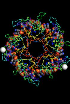Look at the really cool molecule I found on @MoleculeWorld!  PDB: 4NOE Crystal Structure of Ddrb Bound to 30B ssDNA