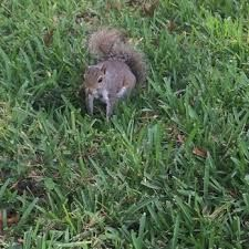Squirrel - #contest