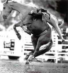 """How would you translate """"riding a bucking bronco"""" into PT ? In rodeos of the U. West bareback bronc riding is a major event. Rodeo Cowboys, Real Cowboys, Cowboy Horse, Cowboy And Cowgirl, Bull Riding, Horse Riding, Bareback Riding, Rodeo Time, Cowgirls"""